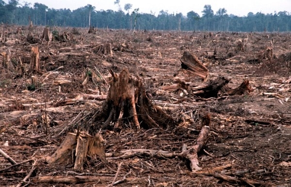 Deforestation. Image by Livescience.