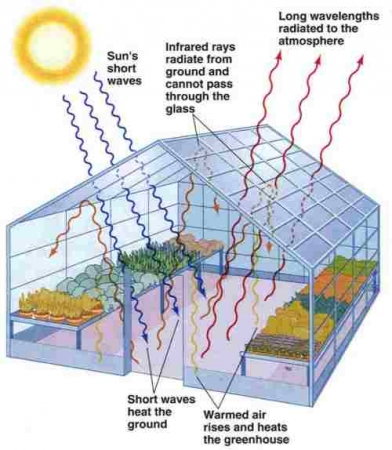 How a greenhouse works. Image via Hydroponics.