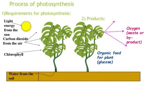 Factors, inputs and outputs of photosynthesis. Image credit slideshare.net