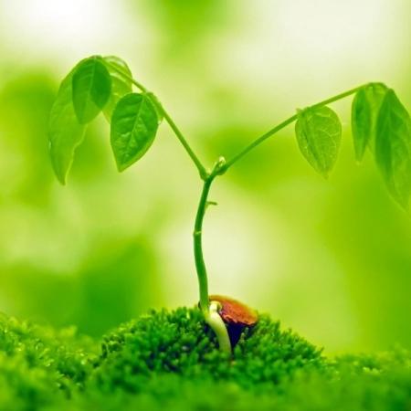 A green plant. Image credit nipunscorp.com