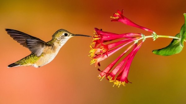 Bird pollination diagram electrical drawing wiring diagram examining adaptations of flowers to pollination free zimsec rh revision co zw diagram of pollination and fertilization of a flower types of pollination ccuart Image collections