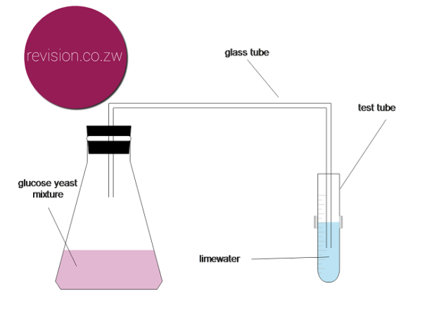 Experiment making ethanol - Free ZIMSEC Revision Notes and Past ...