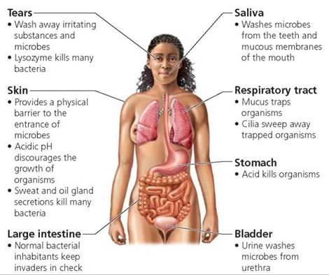 Natural Defense Mechanisms Of The Body